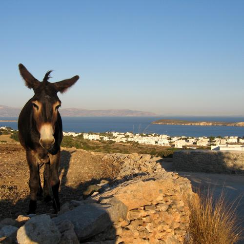 st_ezel op Grieks eiland